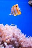 Het mariene leven - vissen Stock Fotografie