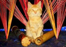 Het mediteren van katje in de zwarte lichte hoek stock foto