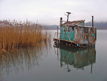 In het meer Royalty-vrije Stock Foto's