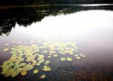 Het meer Royalty-vrije Stock Afbeeldingen