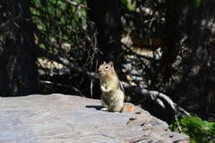 Het meer Banff van de eekhoornmorene Stock Foto's