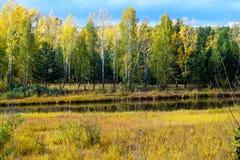 Het meer en de bomen in de herfstpark Royalty-vrije Stock Foto