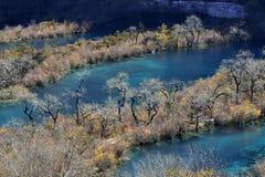 Het meer en de boom Stock Afbeelding