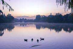 Het meer en de eend Royalty-vrije Stock Foto