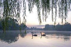Het meer en de zwaan Stock Foto's