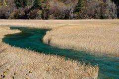 Het meer en het riet Stock Afbeelding
