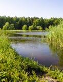 Het meer in het park Stock Foto's