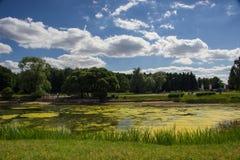 Het meer in het park Stock Fotografie