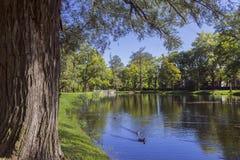Het meer in het park Autumn Landscape Stock Afbeelding