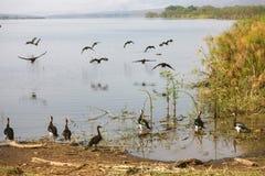 Het Meer Kivu Stock Afbeelding