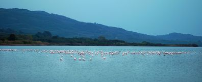 Het meer Korission is een zeer belangrijk ecosysteem van Korfu, waar vele trekvogels zoals roze flamingo's ophouden stock fotografie