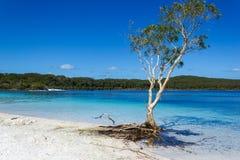 Het meer Mackenzie op Fraser Island van de Zonneschijn van Queensland is een mooi zoetwatermeer populair met toeristen die bezoek royalty-vrije stock fotografie