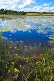Het meer met de waterlelies Stock Afbeeldingen