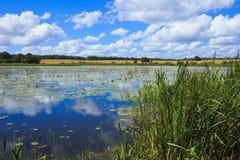 Het meer met de waterlelies Royalty-vrije Stock Foto