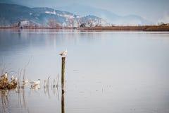 Het meer, oase van vrede en aard stock fotografie