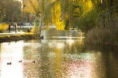 Het meer in het park royalty-vrije stock foto's
