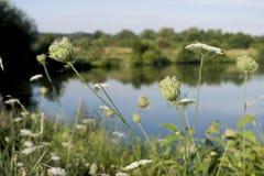 Het meer plant bloemenlandschap Stock Foto