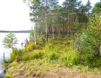 Het meer is in taiga met de banken met pijnboom en mos worden overwoekerd dat stock fotografie