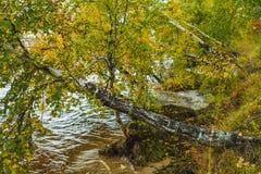 Het meer van Baikal in de herfst Stock Foto