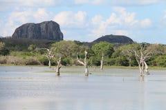 Het meer van Buthawawewa, het Strikte Natuurreservaat van Yala Royalty-vrije Stock Fotografie