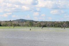 Het meer van Buthawawewa, het Strikte Natuurreservaat van Yala Royalty-vrije Stock Foto's