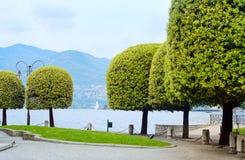 Het meer van Como, bomen op oever van het meer. Italië, Europa. Stock Fotografie