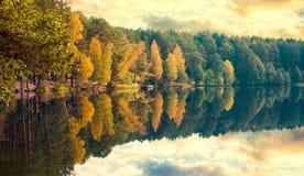 Het meer van dalingsbomen Royalty-vrije Stock Afbeelding