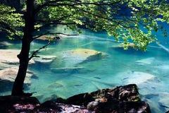 Het meer van de berg in bos Stock Afbeelding