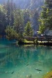 Het meer van de berg in bos Stock Foto