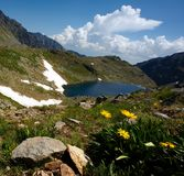 Het meer van de berg en groot geel bloemendetail Stock Fotografie