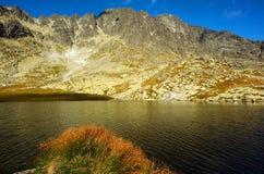 Het meer van de berg met gras Stock Foto