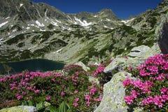 Het meer van de berg tussen bloemen en sneeuwflarden Royalty-vrije Stock Afbeeldingen