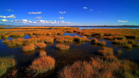 Het meer van de bloem Stock Foto's