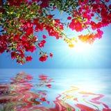 Het Meer van de geranium Royalty-vrije Stock Foto