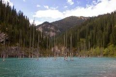 Het meer van de Kaindyberg in Kazachstan royalty-vrije stock afbeelding