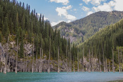 Het meer van de Kaindyberg in Kazachstan stock afbeeldingen