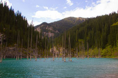 Het meer van de Kaindyberg in Kazachstan stock afbeelding