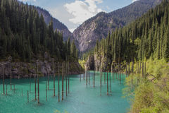 Het meer van de Kaindyberg in Kazachstan Royalty-vrije Stock Fotografie