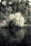 Het meer van de mysticus Stock Afbeeldingen