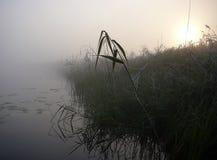 Het meer van de ochtend in mist Stock Fotografie