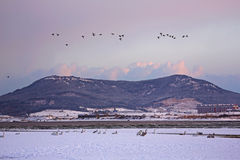 Het meer van de Rongchengzwaan Royalty-vrije Stock Afbeelding