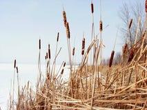 Het meer van de winter. Royalty-vrije Stock Afbeeldingen