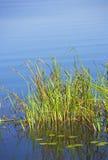Het meer van de zomer Royalty-vrije Stock Afbeeldingen