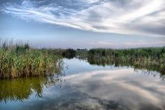 Het meer van de zomer Stock Afbeelding