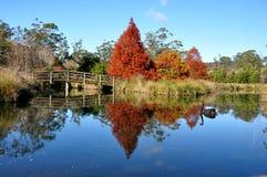 Het meer van de zwaan Stock Foto's