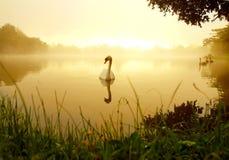 Het meer van de zwaan Royalty-vrije Stock Fotografie