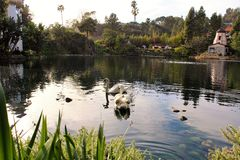 Het meer van de zwaan Stock Foto
