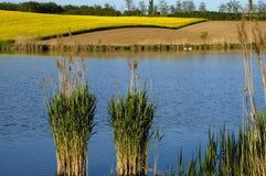 Het meer van de zwaan Royalty-vrije Stock Foto's
