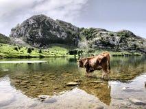 Het meer van Enol Stock Fotografie