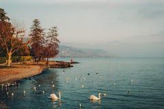 Het meer van Genève in wintertijd Royalty-vrije Stock Foto's
